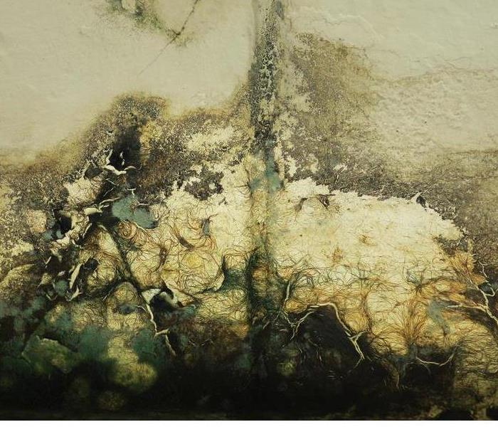 Commercial Prevent Mold Growth With Immediate Response